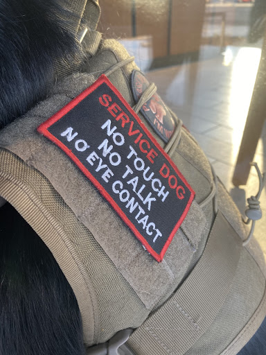 Eevee, a service dog, wears a vest warning not to touch, talk, or make eye contact. The vest is frequently ignored.